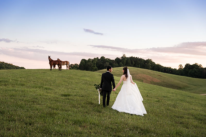 Bride and Groom walking in a field with horses watching